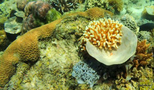Filipiny nurkowanie Coral Garden opinie