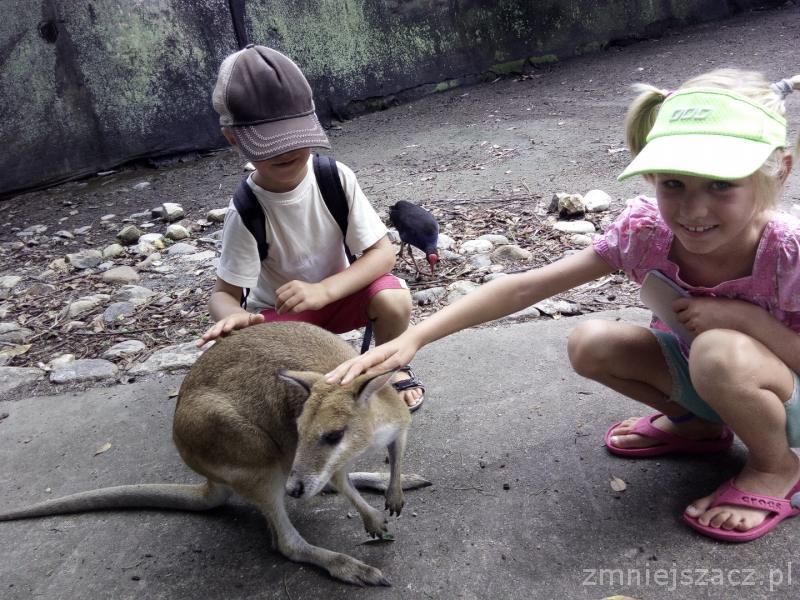 rodzinne atrakcje Australia