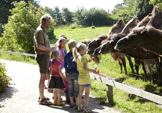Karmienie zwierząt Safari Givskud