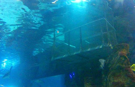 klatka do nurkowania z rekinami akwarium Barcelona