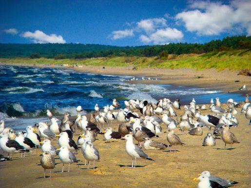 Krynica Morska plaża atrakcje opinie