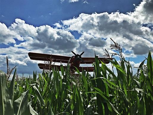 labirynt w kukurydzy swarzewo opinie (4)