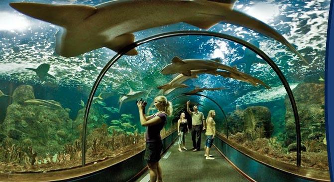 zoo Teneryfa atrakcje dla dzieci