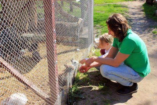 karmienie zwierząt zoo pomorskie