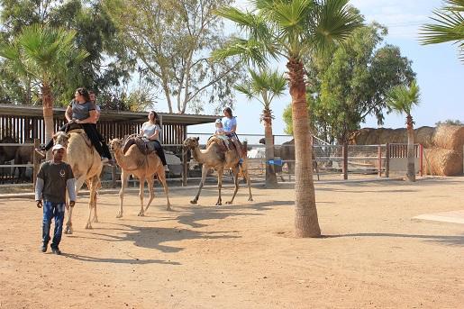 atrakcje dla dzieci Cypr Mazotos Camel Park