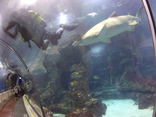 nurkowanie z rekinami Barcelona akwarium opinie