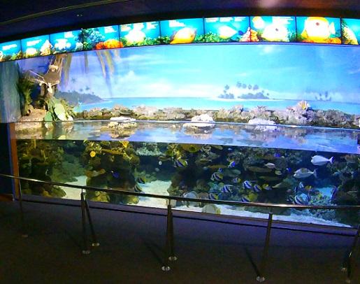 oceanarium Barcelona opinie akwarium