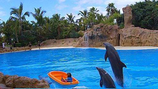 loro park plywanie z delfinami teneryfa opinie
