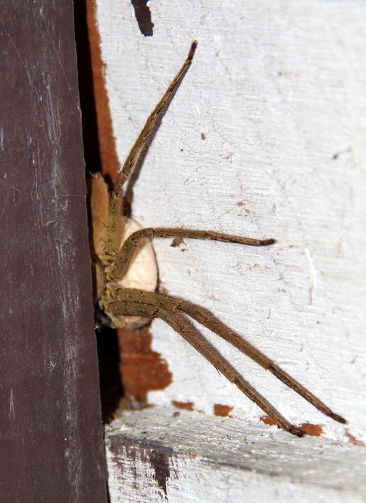 pająk (3)