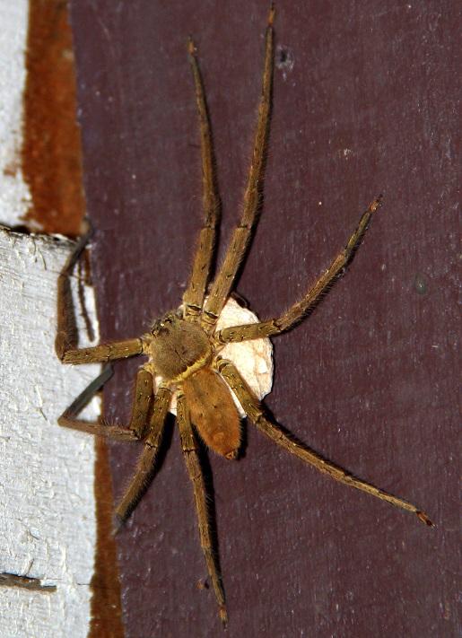 pająk (4)