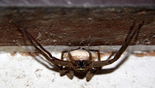 pająk -Borneo wakacje opinie