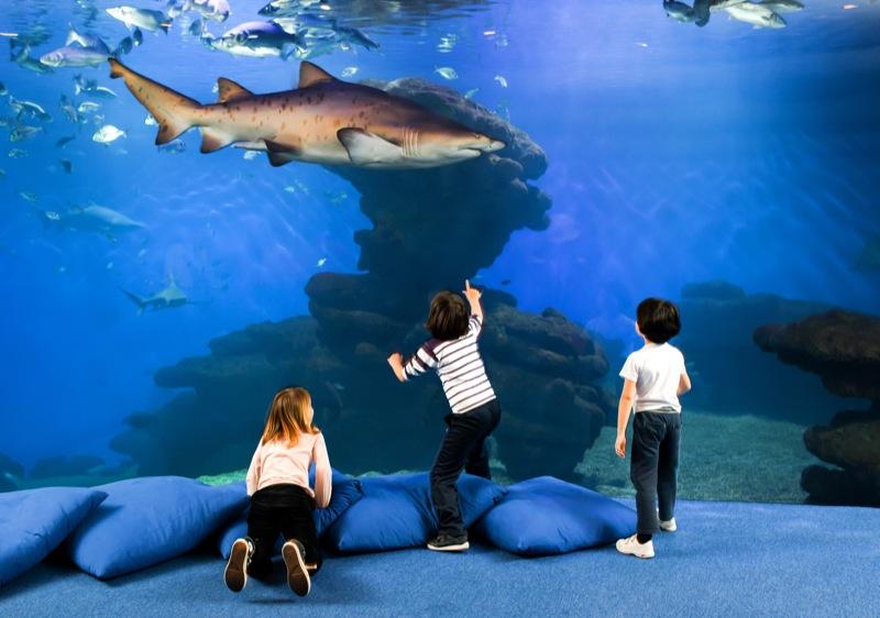 Palma Aquarium Playa de Palma atrakcje dla dzieci