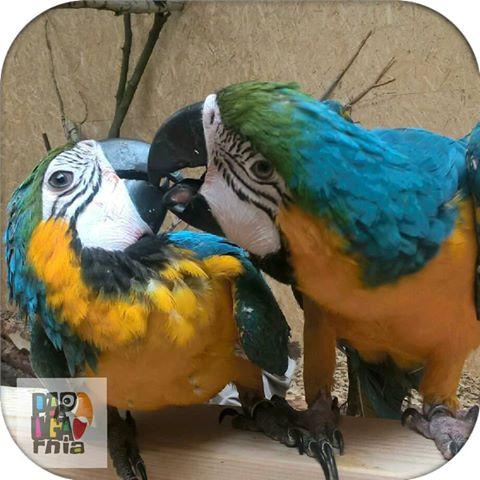 Papugarnia Reda ceny biletów
