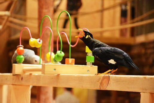 Papugarnia Reda atrakcje opinie
