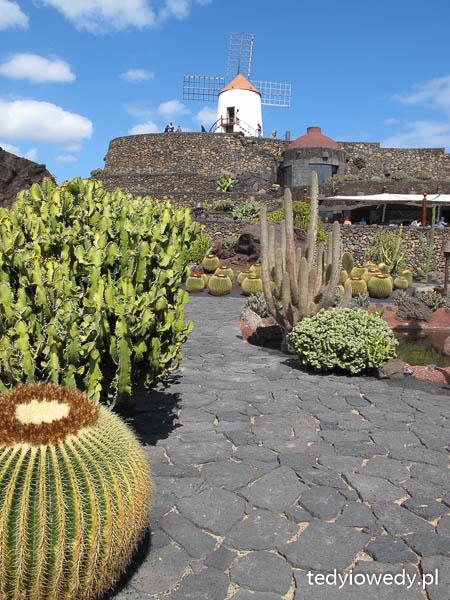 park kaktusów Lanzarote atrakcje dla dzieci opinie