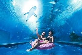 park wodny reda z rekinami opinie
