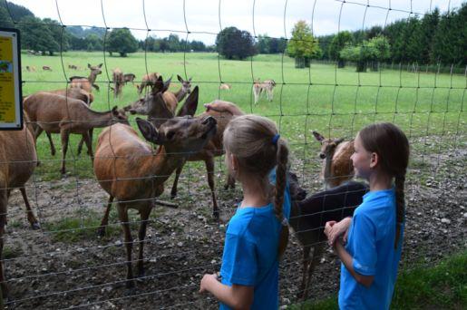 Park zwierząt Rosegg Austria opinie atrakcje
