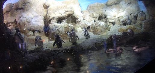 pingwinarium Barcelona Opinie