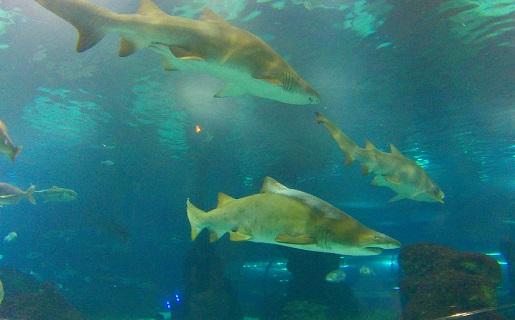 rekiny Barcelona akwarium opinie oceanarium atrakcje dla dzieci