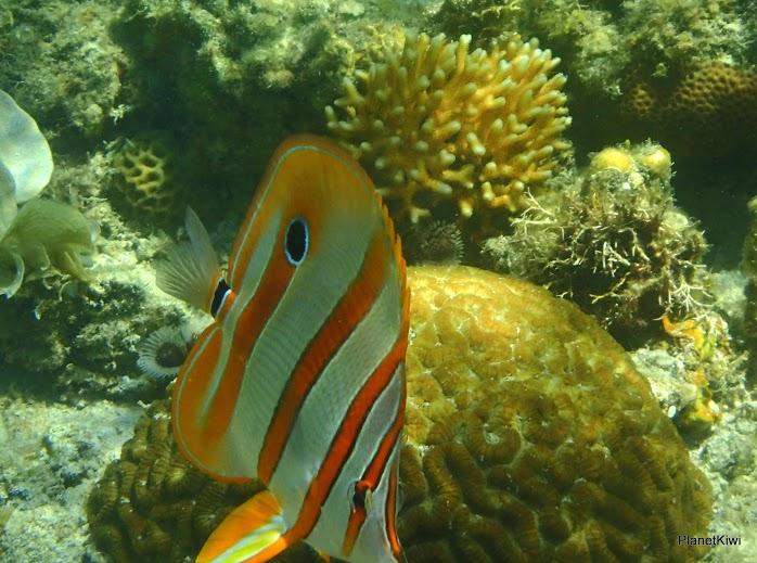 rafa koralowa Filipiny atrakcje