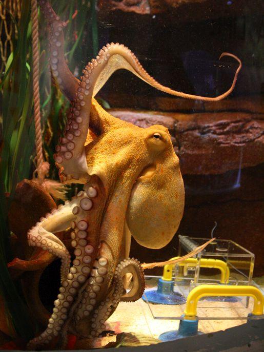 Aquadom Sea Life opinie