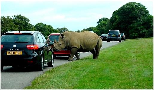 safari Wielka Brytania opinie