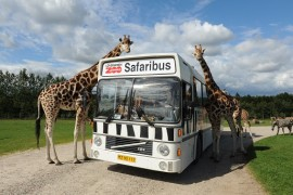 Safari Givskud Zoo atrakcje dla dzieci