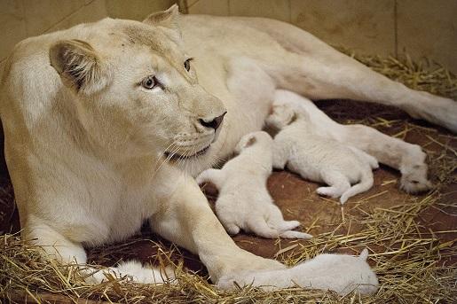 safari w Polsce - Borysew - rodzinne atrakcje