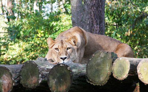 Serengeti park dzikich zwierząt niemcy opinie