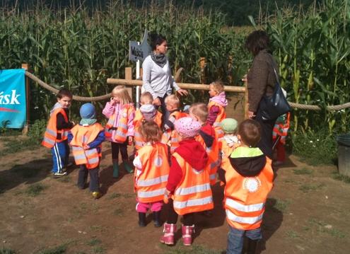 labirynt w kukurydzy Bliziny