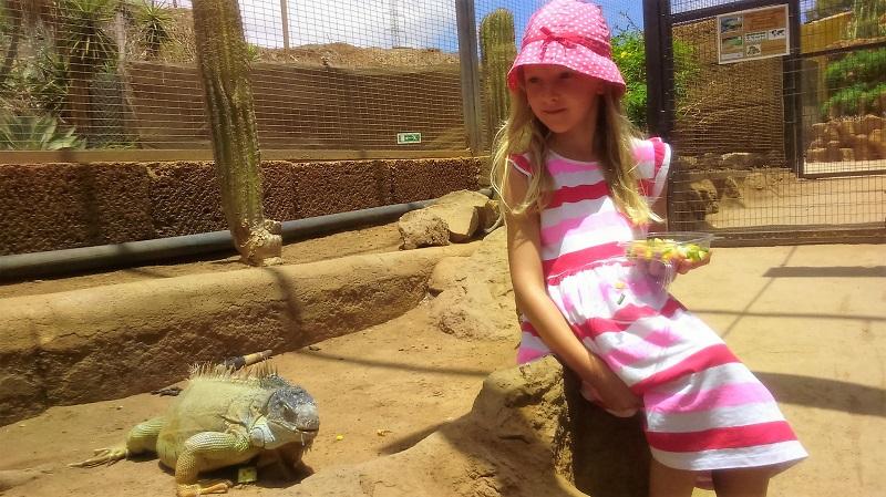 zoo Teneryfa atrkacje dla dzieci
