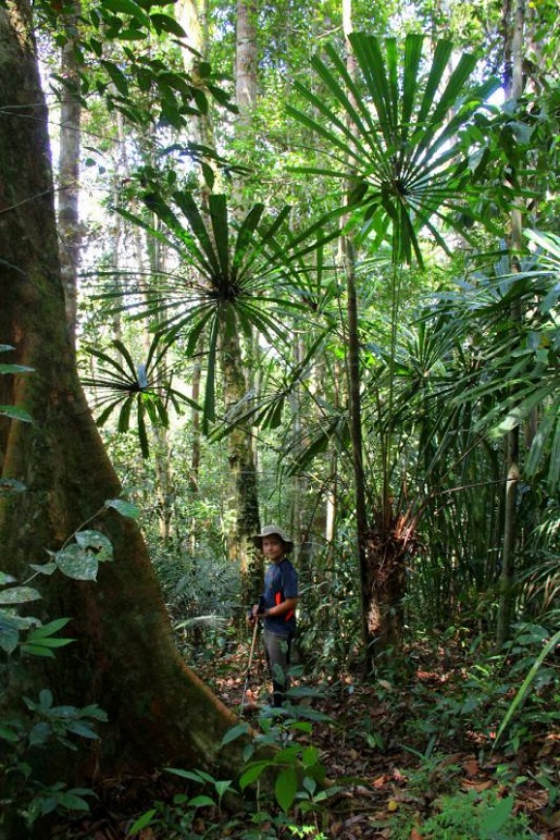 trekking dżungla Borneo