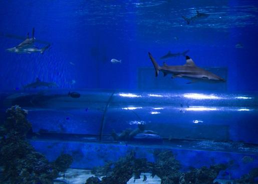 tunel z rekinami aquapark reda opinie ceny