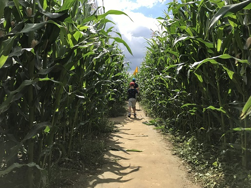 władysławowo labirynt w polu kukurydzy opinie ceny atrakcje (3)