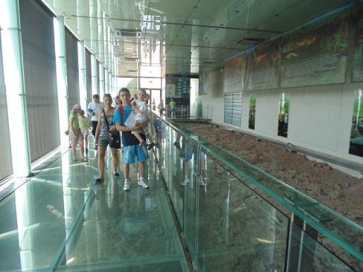 w srodku pawilonu paleontologicznego