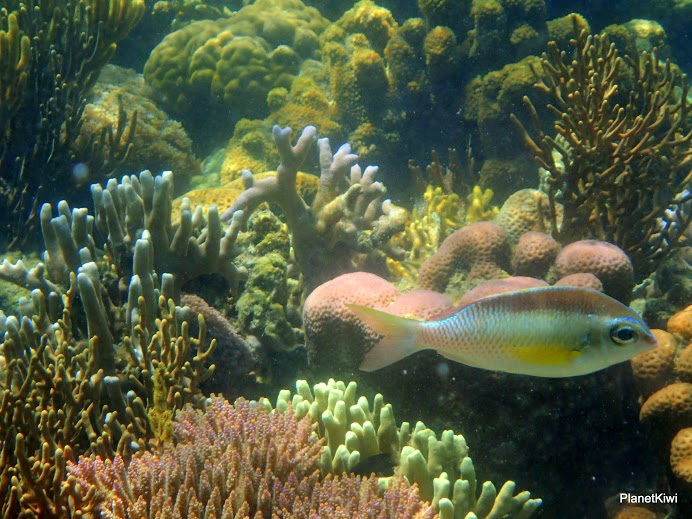 atrakcje dla dzieci Filipiny nurkowanie