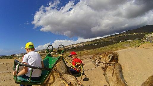Wielbłądy Teneryfa - wakacje z dziećmi zimą opinie
