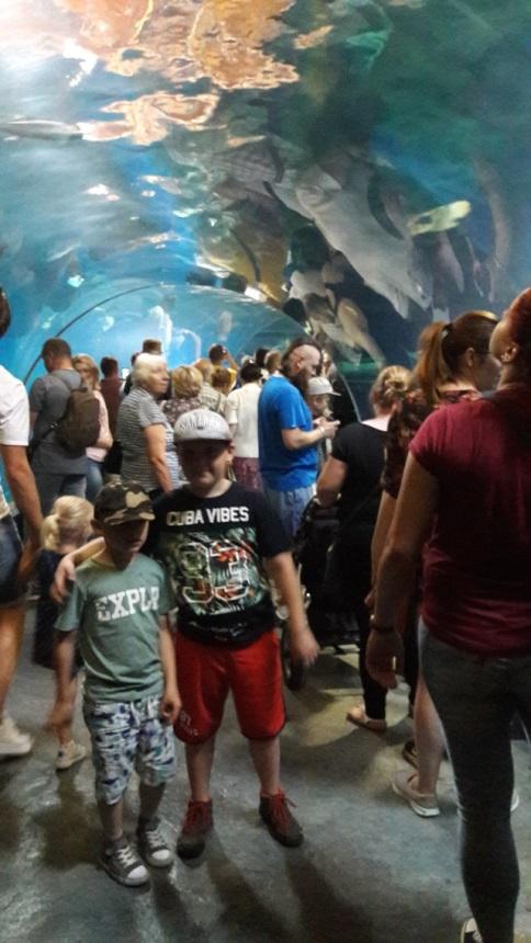 wizyta w afrykarium we Wrocławiu - kolejki w wakacje