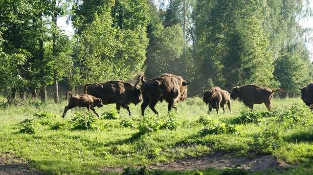 atrakcje dla dzieci Mazury - park żubrów