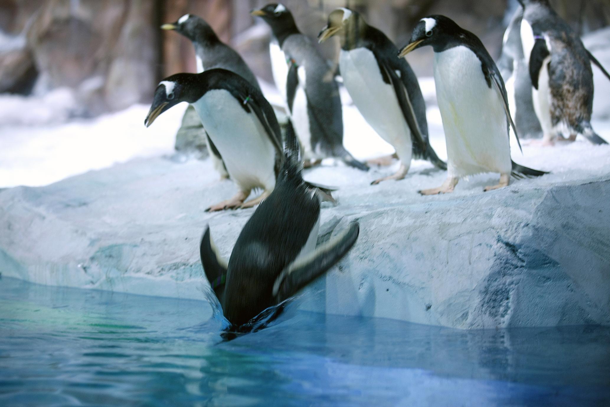 Kraina Polarna pingwiny