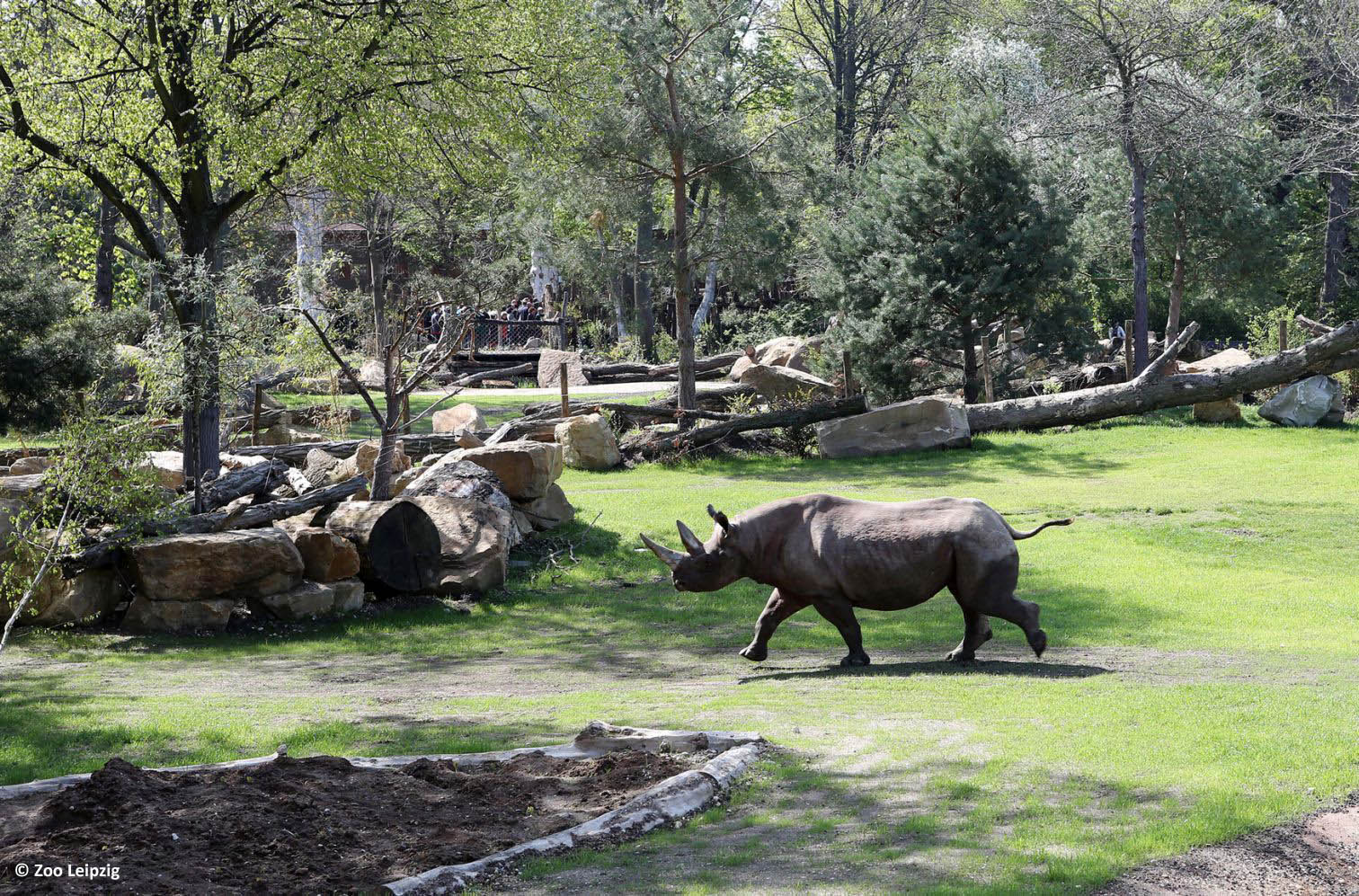 zoo Lipsk atrakcje