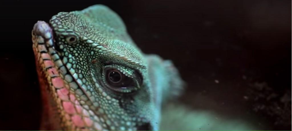 zoo kaszuby atrakcje