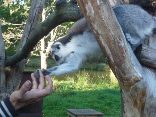 zoo kraina bajek dolina charlloty opinie (1)