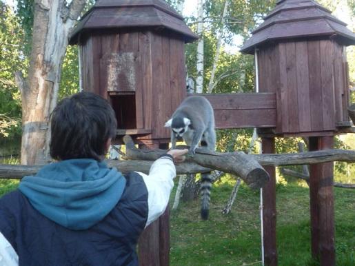 zoo kraina bajek dolina charlloty opinie (6)