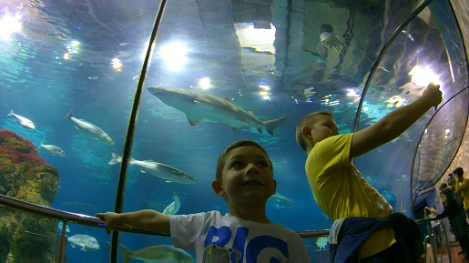 zwiedzanie z dzieckiem akwarium Barcelona opinie