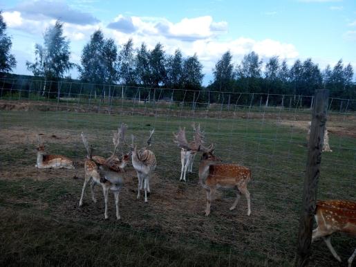 świętokrzyskie Jura Park atrakcje dla dzieci
