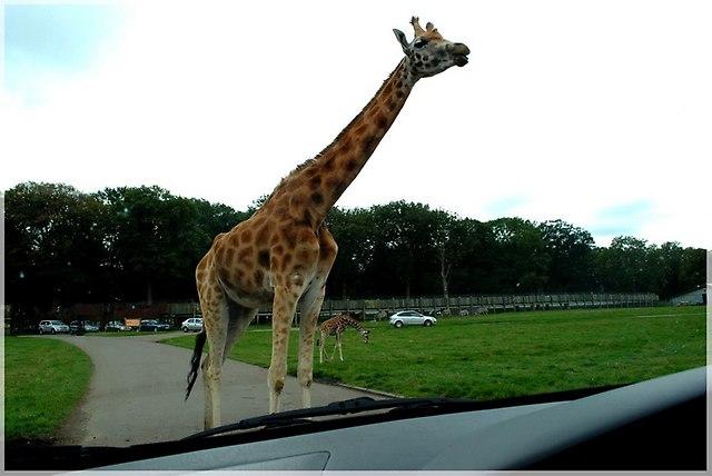 z dzieckiem na safari
