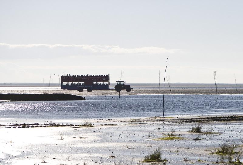 przeprawa traktorem na wyspę Mando Dania odpływy Morze Wattowe