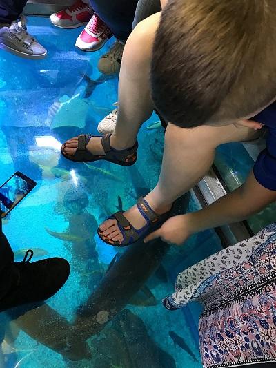 łódź ze szklanym dnem akwarium dubai mall