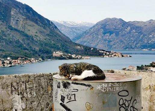 Czarnogóra z dzieckiem zimą atrakcje zwiedzanie opinie